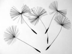 seeds-641520_1920